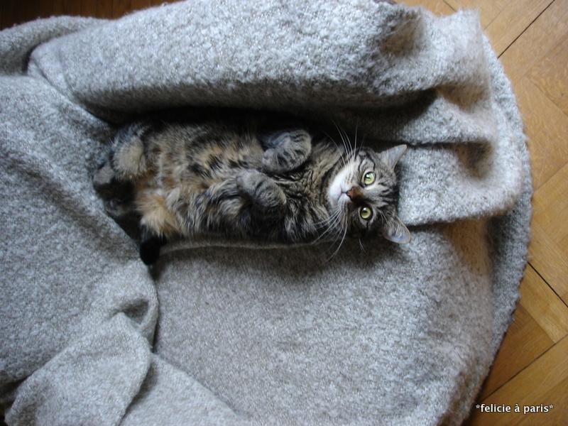 les chats n aiment pas tre sur le dos f licie paris. Black Bedroom Furniture Sets. Home Design Ideas